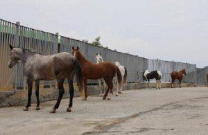 Kayıp atlarla ilgili yeni detaylar ortaya çıktı