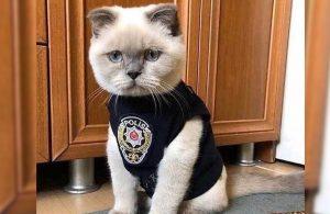 """Fare istilasına karşı """"Kediler İş Başında"""" ekibinden bini aşkın kedi görevde"""
