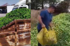 Çiftçi ürünlerini çöpe döküyor