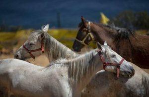 İBB'den 'kayıp atlar' açıklaması