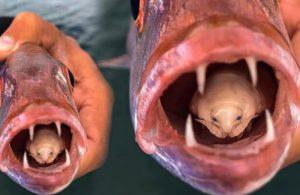 Dil yiyen parazitin fotoğrafı hayrete düşürdü