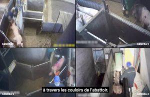 L214, gizli kamerayla hayvanlara işkencenin görüntülerine ulaştı