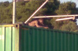 Manisa'da korkunç olay: Trenin üzerinde fotoğraf çektirmek isterken…