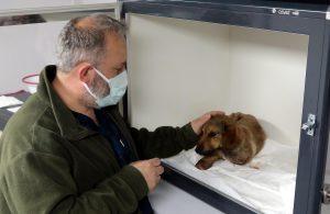 Darp edildiği iddia edilen yavru köpeğin ön iki bacağı kesildi