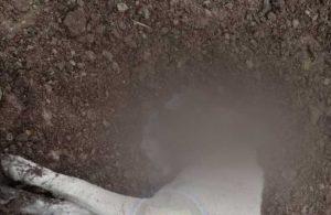 Bucak'ta sokak hayvanlarına katliam