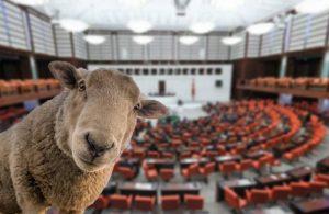 'Yasa dışı otlayan' ve gözaltına alınan koyunların görüntüleri paylaşıldı
