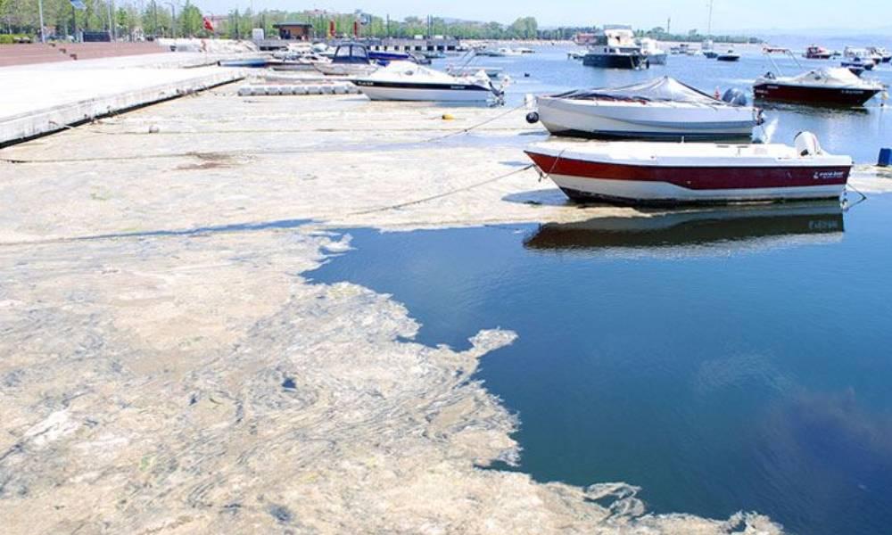 Deniz Bilimci Prof. Cemal Saydam'dan önemli müsilaj açıklaması