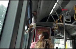 İETT otobüsünün sevimli yolcusu