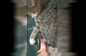 İBB'den 'kedili İstanbulKart' paylaşımı