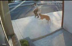 Havlayan köpekten kaçarken yola atladı, kamyon çarptı
