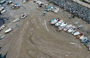 Prof. Dr. Taş: Marmara'daki felaketin Karadeniz'de yaşanmaması için ivedilikle tedbir alınmalı