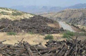 'Cudi Dağı'ndaki binlerce ağacı AKP'li vekilin babası kestirdi' iddiası