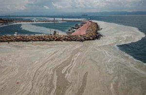 Darıca kıyıları müsilajla kaplandı