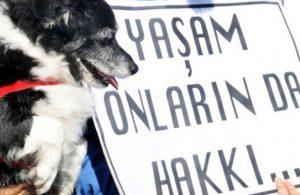 Hayvan Hakları Yasası komisyonda kabul edildi