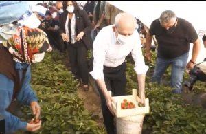 Kılıçdaroğlu Aydın'da çilek hasadına katıldı
