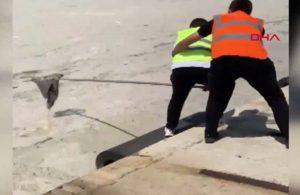 Müsilaj nedeniyle uçamayan martı böyle kurtarıldı