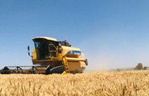 Reyhanlı'da 40 dönümlük buğday tarlası hasadı gerçekleştirildi