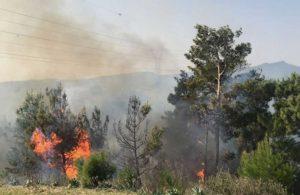 Gümüşhane'deki yangında meyve ağaçları ve 4 metruk bina zarar gördü