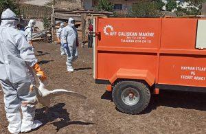 Kuş gribi yeniden canlanıyor: 200 hayvan öldürüldü