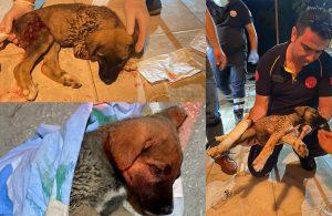 Yaralı köpeğe müdahale