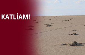 Tuz Gölü'nde binlerce flamingo yavrusu öldü!