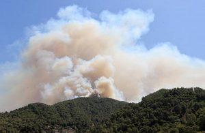 AFAD ülke genelindeki orman yangınlarına ilişkin açıklama yaptı