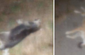 Pendik'te 17 köpek ölü bulundu: İşkence edilip, zehirlenmişler