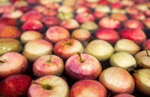Türkiye'den gönderilen elmalar Rusya'ya sokulmadı
