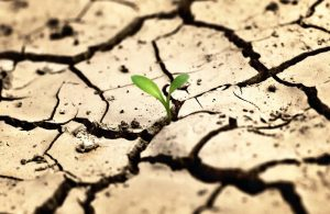 Uzmanlardan kuraklık uyarısı: Önümüzdeki 10 yılda su krizi yaşanacak