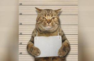 Kedilere sokağa çıkma yasağı ilan edildi