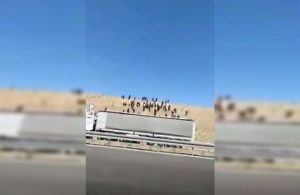TIR'la yol kenarına bırakılan kaçak göçmenler yakalandı