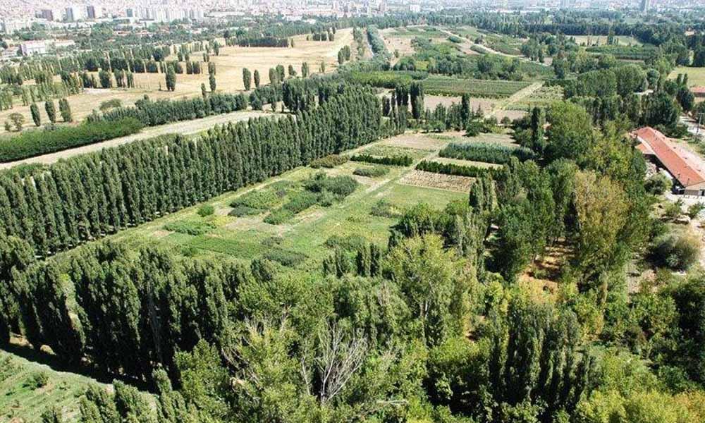 AKP, Atatürk Orman Çiftliği'ni yok etmekte kararlı!