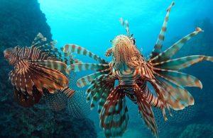 65 balık türü Akdeniz'e göç etti