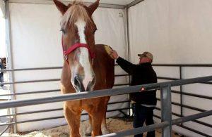 Guinnes'e giren 'dünyanın en uzun atı' öldü