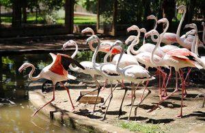 Satılmak istenen flamingolar koruma altına alındı