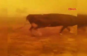 Manavgat'ta hayvanlarıyla alevlerin ortasında kalan çiftçinin feryadı yürekleri dağladı