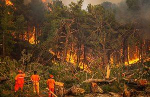 'Ormanların rehabilitasyonu mümkün, yüzde 99'u geri kazanılabilir'