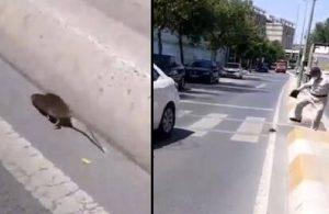 Sokakta gezen fareyi 'sağ yap' diyerek kanalizasyona soktu