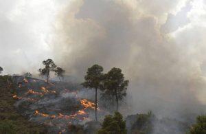 Cezayir'in 14 ilinde yangın: 7 ölü