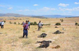Tarla etrafına dökülen gübreyi yiyen 25 keçi öldü