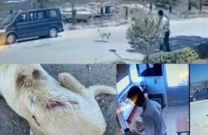 Köpeğin üzerine kaynar su döken özel güvenlik serbest bırakıldı!
