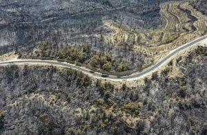 TEMA Vakfı Genel Müdür Yardımcısı Hikmet Öztürk: Gelişi güzel ağaç dikilmez
