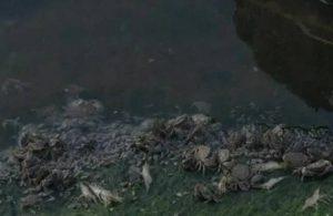 İstanbul'daki toplu balık ve yengeç ölümlerinin nedeni belli oldu