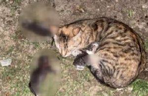 Yavru kedileri kürekle öldüren zanlıya istenen ceza belli oldu