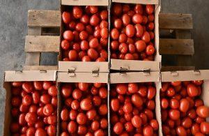 Türkiye'den Rusya'ya giden domateslerde virüs tespit edildi!