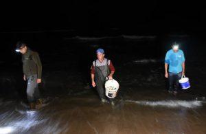 Batı Karadeniz'de tonlarca balık kıyıya vurdu