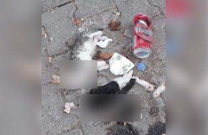 Birinin bacakları ve başı kesilmiş, ölü 2 yavru kedi bulundu
