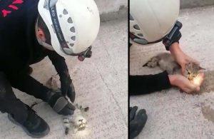 Yavru kediyi kalp masajıyla hayata döndürdü