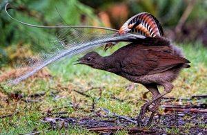 Bu kuş sosyal medyada gündeme oturdu