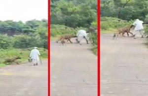 Hindistan'da yaşlı adama sırtlan saldırdı